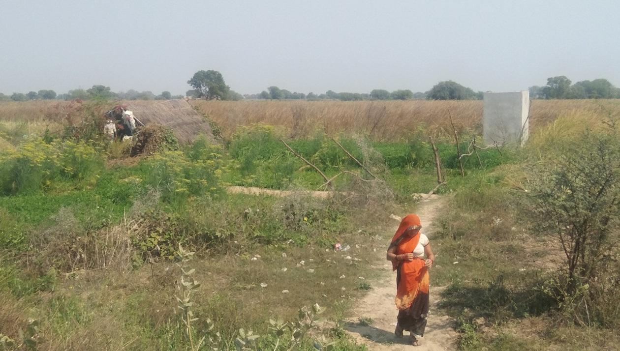 250 बीघा जमीन पर खड़ी फसल की कटाई शुरू