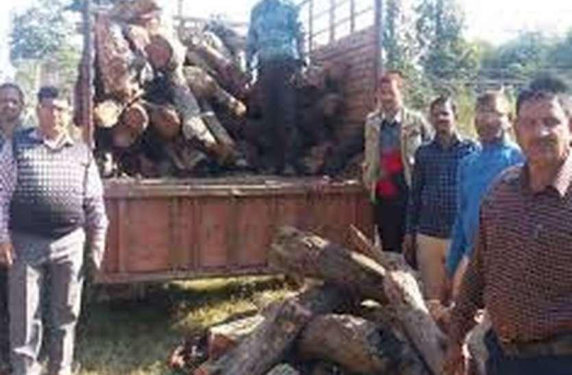 वनविभाग की सफलता: रात में 3 बजे पीछा कर पकड़ा खैर की8 टन गीली लकड़ी से लदा ट्रक