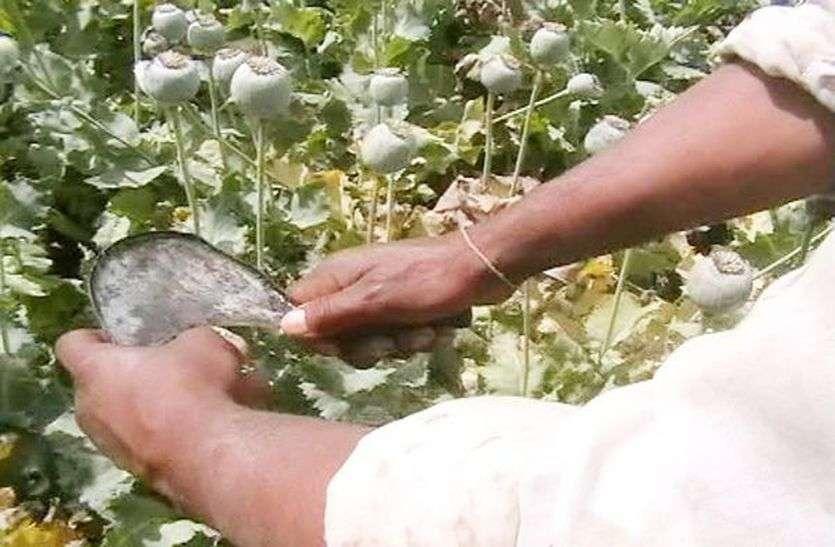 अभी तक अफीम फसल नुकसानी के कुल 4271 किसानों ने दिए आवेदन