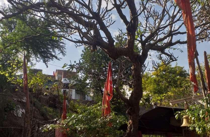 बजरंग वाटिका में प्रकृति के सानिध्य में विराजे हैं पवनसुत