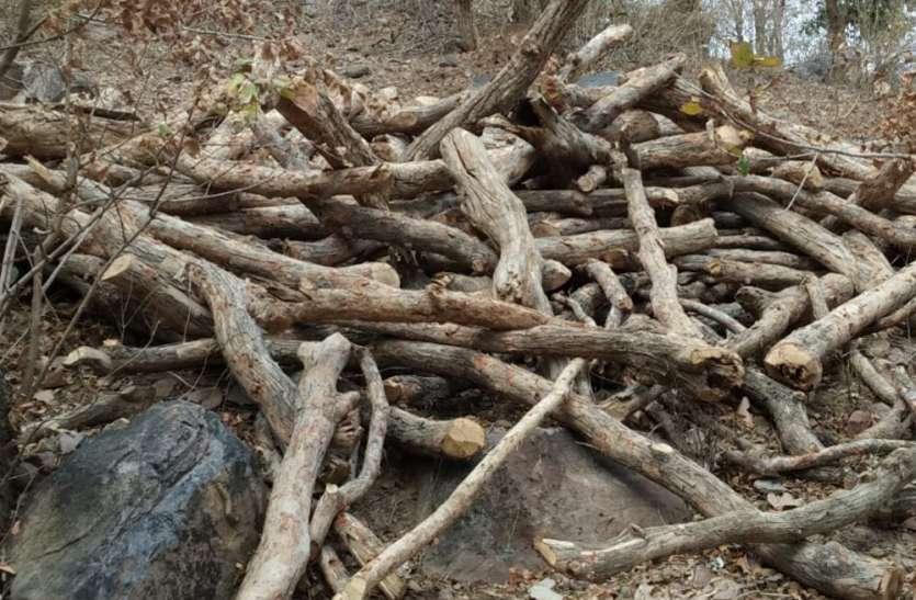 धड़ाधड़ जंगल की होती रही कटाई और चैन की नींद सोता रहा वन अमला, जानिए क्या है मामला