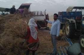 बंपर पैदावार - यहां के किसान हो गए मालामाल