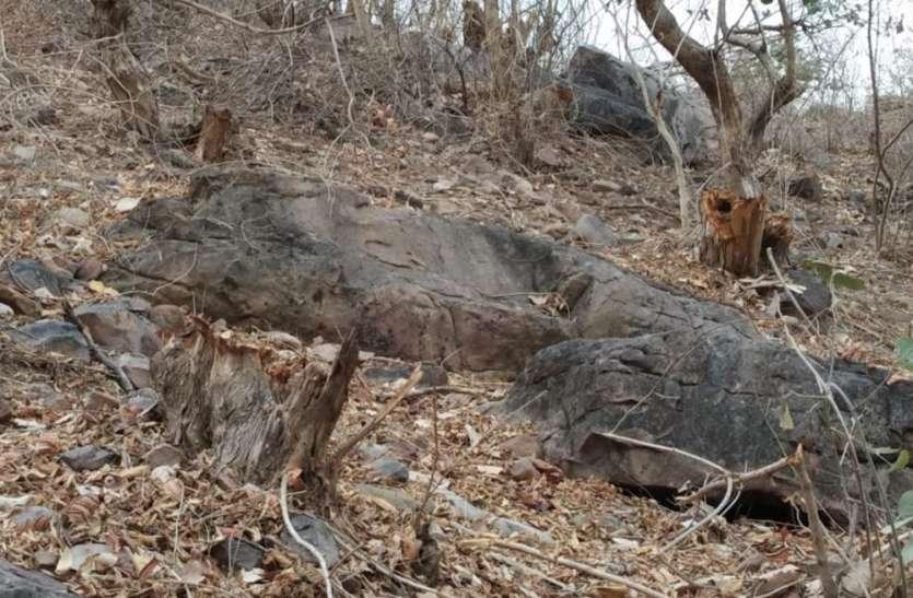 जब जंगल कटा तब सो रहे थे अब पेड़ों के ठूठ गिनने पहुंचे रखवाले, दिनभर चली गिनाई फिर भी नहीं हो पाई पूरी