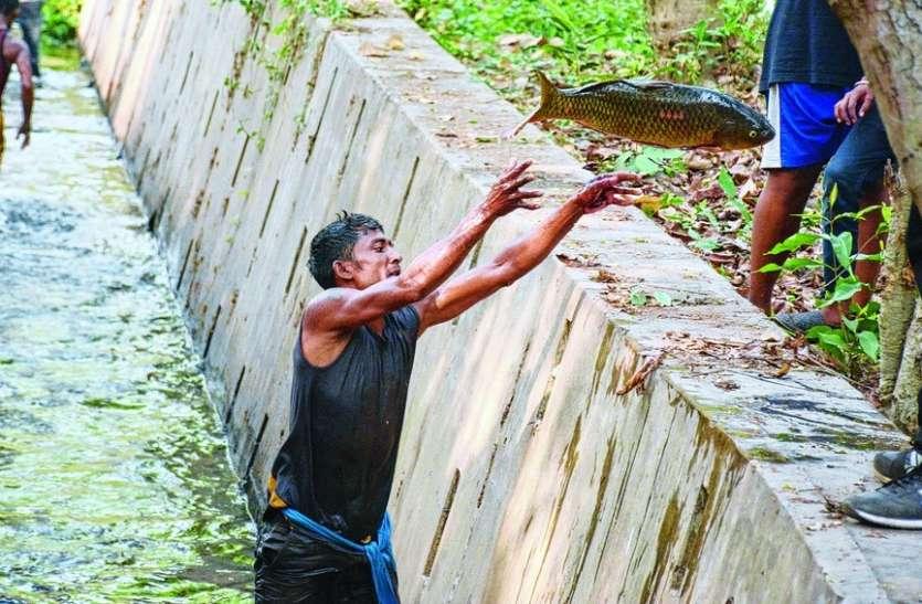 पलट गई मछलियों से भरी तेज रफ्तार ट्रक, रास्ते में मच गई लूट, देखिए कैसे भर-भरकर ले गए लोग