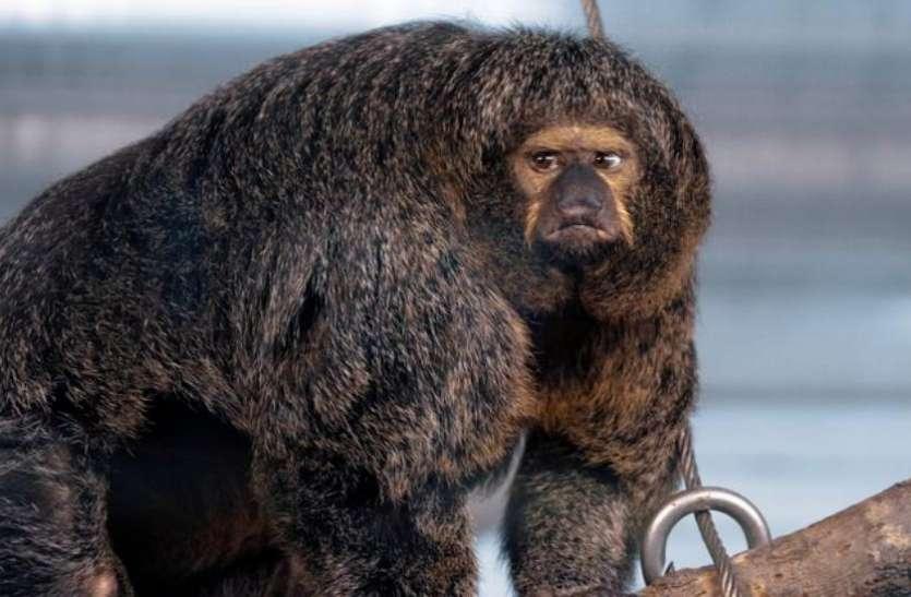 किसी बॉडी बिल्डर इंसान की तरह दिखता है ये जानवर, इसे देखकर लोग खा जाते हैं धोखा