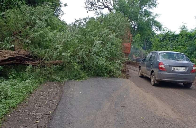 सड़क किनारे के तिरछे पेड़ दे रहे हादसों को दावत