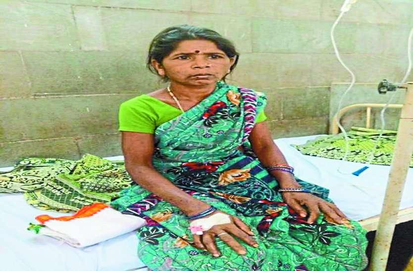 जंगल में महुआ उठा रही महिला पर जंगली सूकर ने किया हमला