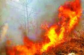 सुकमा: इस वजह से ग्रामीण जंगल में लगा रहे आग, वन संपदा खतरा