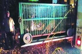 मुर्गी खाने रायपुर आता था तेंदुआ, पकड़ने के बाद आधी रात सीतानदी टाइगर रिजर्व में छोड़ा गया