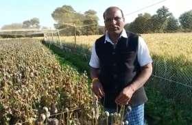 VIDEO: खेत मे खड़ी अफीम की फसल से दूध व डोडे चोरी