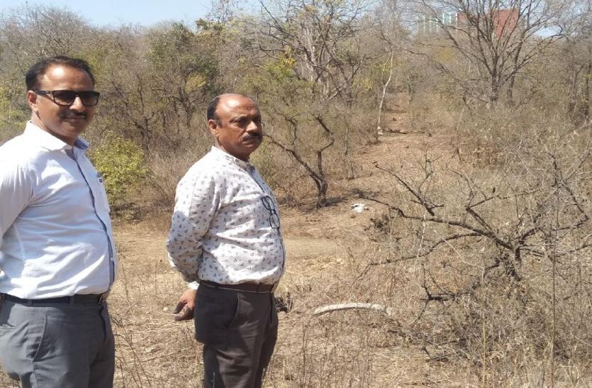 पर्यावरण मंत्रालय के अधिकारी बोले, यहां तो घना जंगल उजाड़ रहा माफिया
