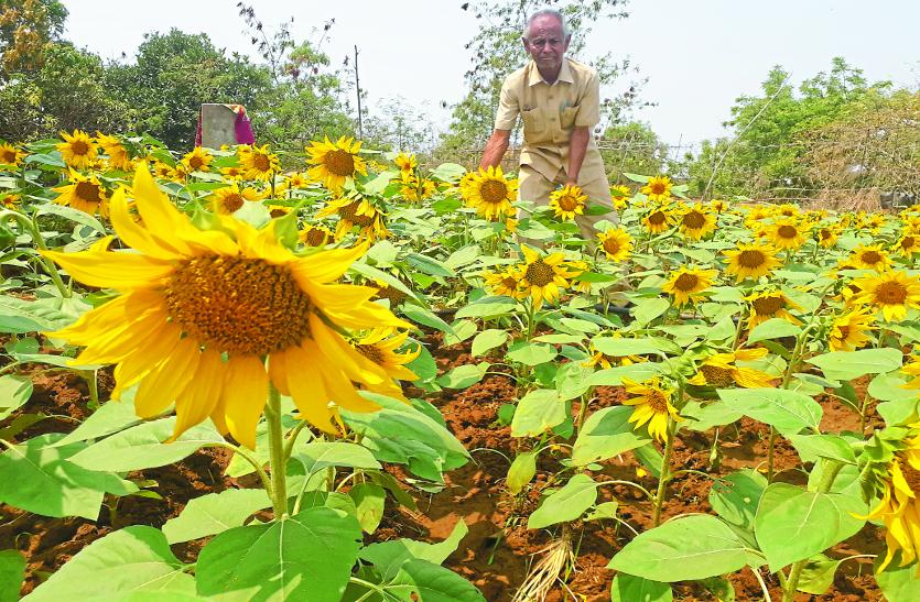 खेती के नए प्रयोग से इस किसान ने सबको किया अचंभित, घर की छत पर ही उगा ली सूरजमुखी फूल जैसी कई फसलें