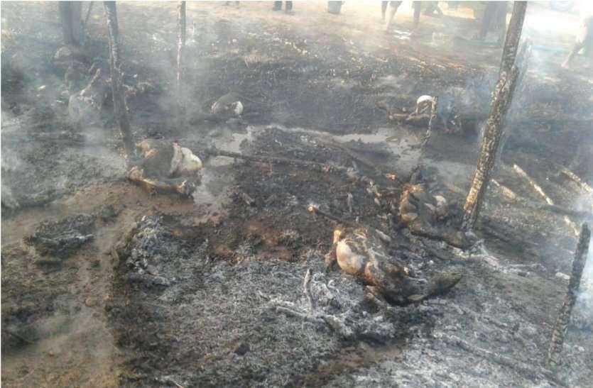आग से जिन्दा जली करीब 40 बकरियां