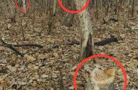 जंगलों में हो रही पेड़ों की अवैध कटाई