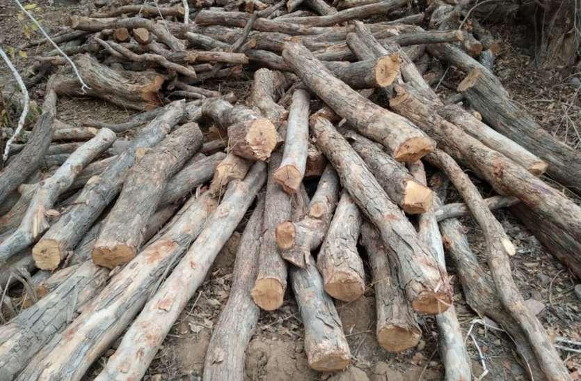 पेड़ों की बलि पर वन अधिकारी-कर्मचारी नपे, 11 चौकीदारों की सेवा समाप्त, जानिए क्या है पूरा मामला