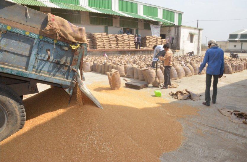गेहूं बेचने इस वर्ष बढ़ी पंजीयन की संख्या, खरीदी केन्द्र हैं कम, किसान होंगे परेशान