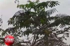 video: अमृत पी हुए निहाल-पौधों में लौटी बहार, ग्रामीणों ने खाद-पानी देने के साथ सुरक्षा के किए बन्दोबस्त