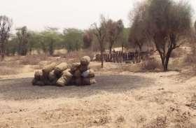 ओरण भूमि में हरे वृक्षों की अवैध कटाई