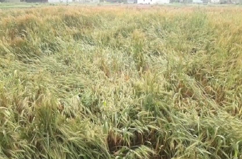 बेमौसम बारिश ने बढ़ाई किसानों की चिंता
