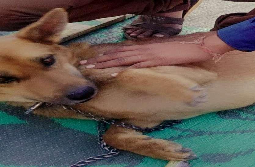 शवयात्रा निकाल कुत्ते का अंतिम संस्कार,अस्थि विसर्जन व तेरहवी भी करेगा परिवार