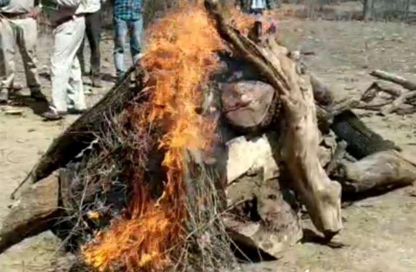 घर में घुसे तेंदुए को 10 घंटे की कड़ी मशक्कत के बाद पकड़ा था पर हो गई मौत, पीएम के बाद किया अंतिम संस्कार
