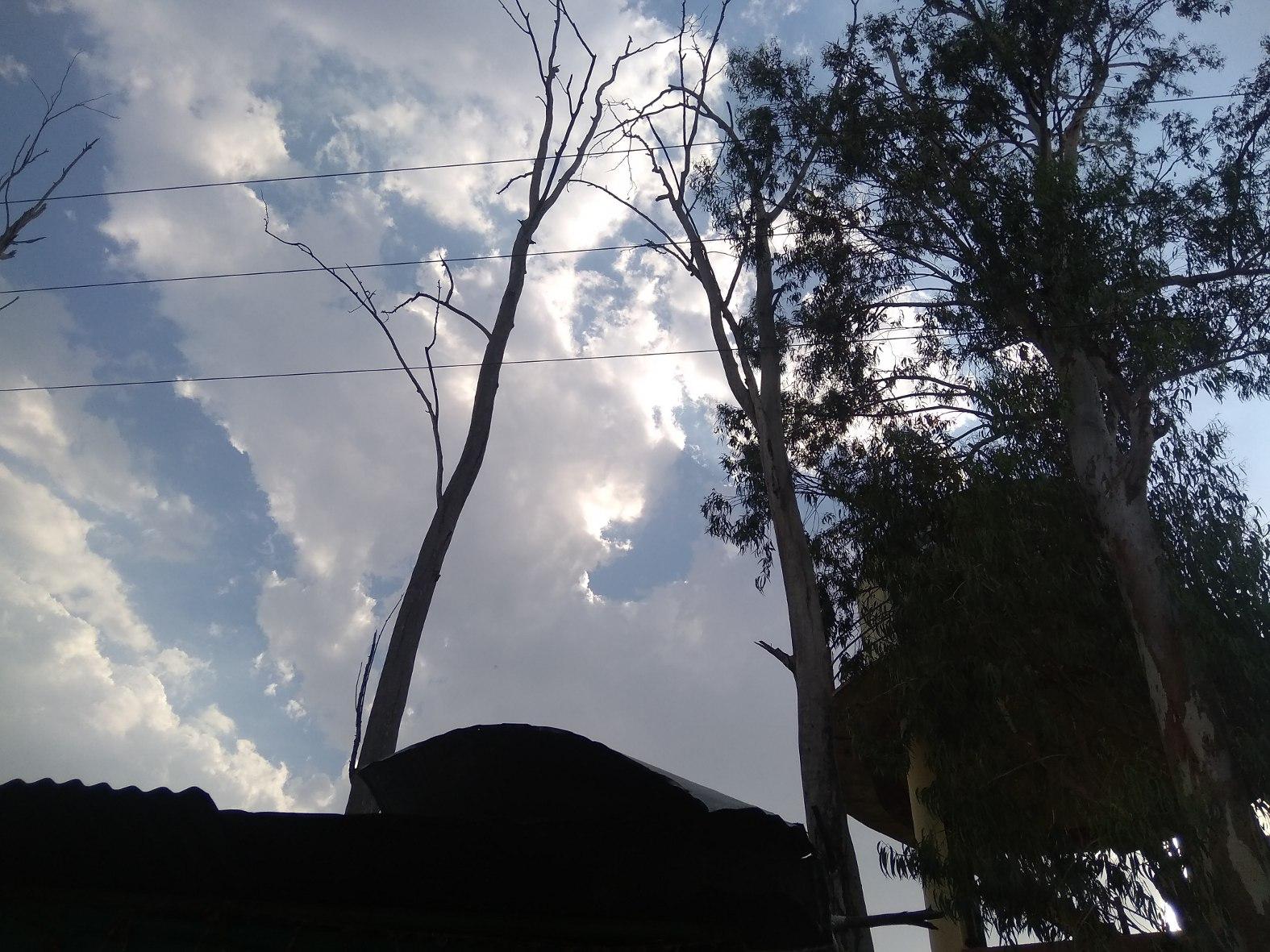 पेड़ों में उलझ रहे हाइटेंशन लाइन के तार