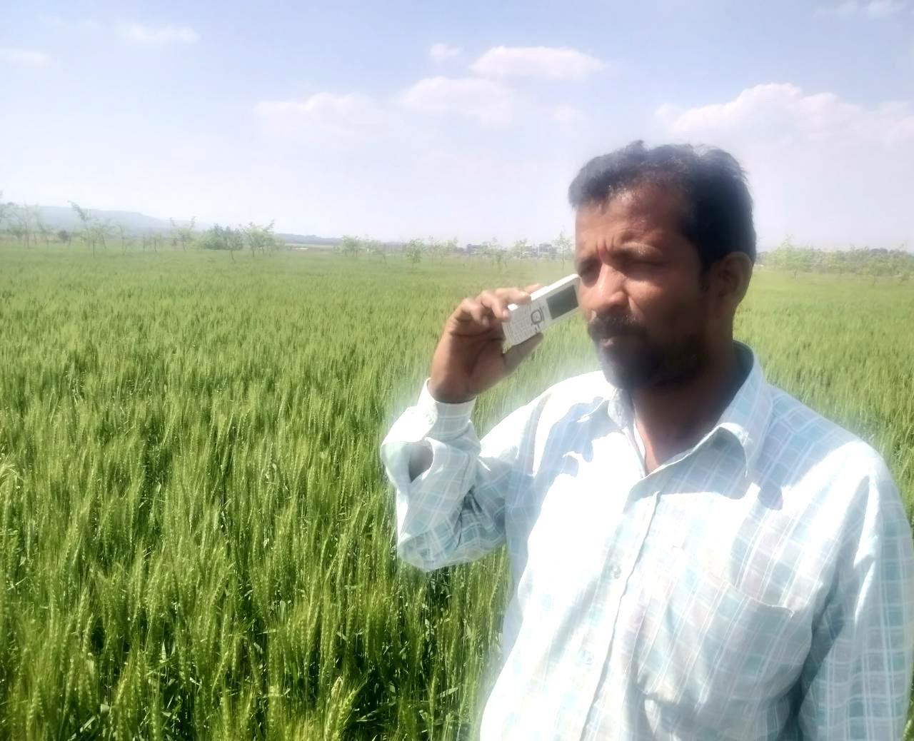 किसान मोबाइल संदेश सेवा से पहुंच रहे खेती संबंधी उपयोगी संदेश, विशेषज्ञों से चुनौतियों का कर रहे वैज्ञानिक हल