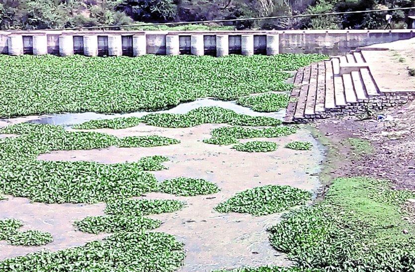 नपा ने सफाई अभियान में नही दिखाई गई रूचि, जलकुंभियों से पट गई नदियां