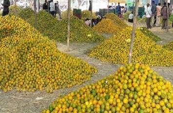 संतरा किसानों का फसल बीमा अटका
