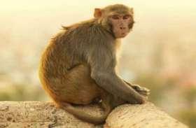14 दिन के बच्चे को घर से उठा ले गया बंदर, जब खुला राज तो हर कोई रह गया हैरान