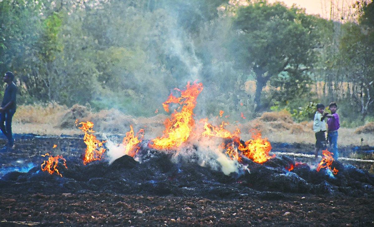 गेहूं के खेत में हर दिन लग रही आग