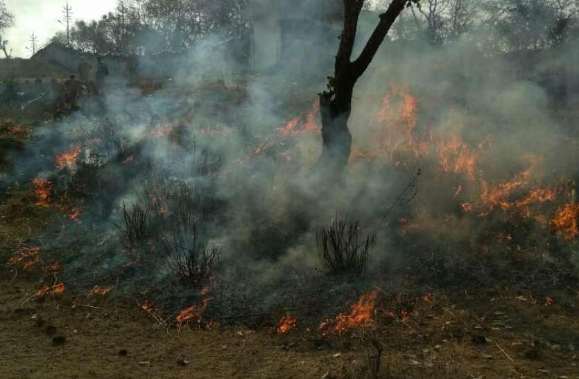 यहां फायरकर्मी खुद लगा देते हैं जंगल में आग