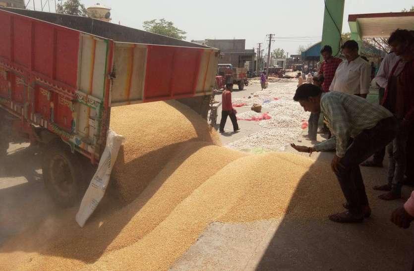 VIDEO: गेहूं की खरीद शुरू, चना और सरसों का इंतजार