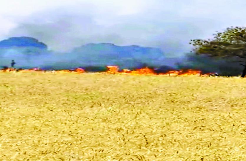 कटाई के दौरान फसल में लगी आग, 55 एकड़ फसल खाक