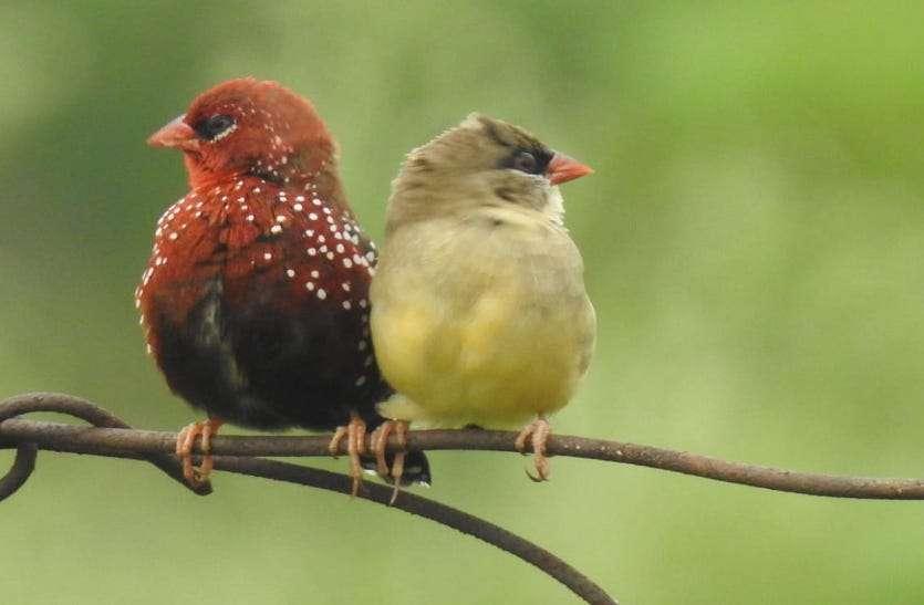 युवाओं ने पक्षियों के लिए बांधे परिंडे, नेक काम में आप भी बने भागीदार