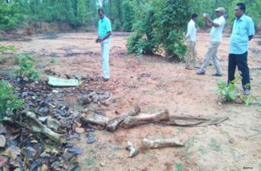 जंगली जानवरों की हड्डियों के टुकड़ों से साथ बरामद हुए ये हथियार, 10 तस्करों को किया गिरफ्तार