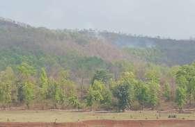 ढीमरखेड़ा, विजयराघवगढ़ के वनक्षेत्रों में हो रही हरे भरे वृक्षों की कटाई