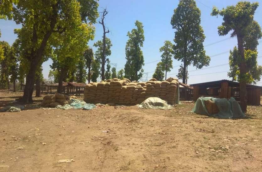 ढाई माह में भी नहीं तुल पाई धान, हजारों क्विंटल धान पर मंडरा रहा खतरा