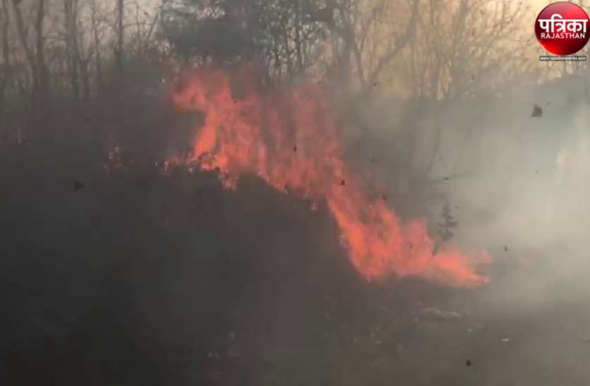 बांसवाड़ा : सुलगती बीड़ी फैंकने से पावर हाउस के निकट जंगल धधका,एक हैक्टेयर वन क्षेत्र मेंनुकसान