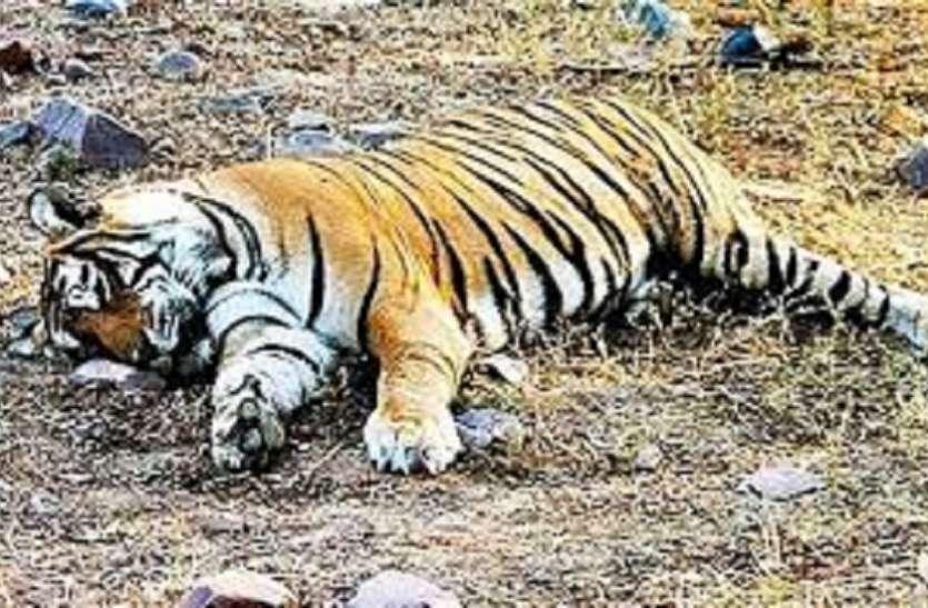 सुंदरवन से मिला मृत रॉयल बंगाल टाइगर