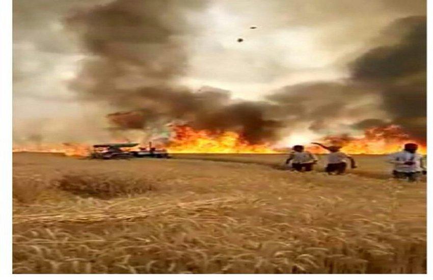 देखते रह गए किसान, 91 एकड़ में लगी गेहूं की फसल जलकर खाक