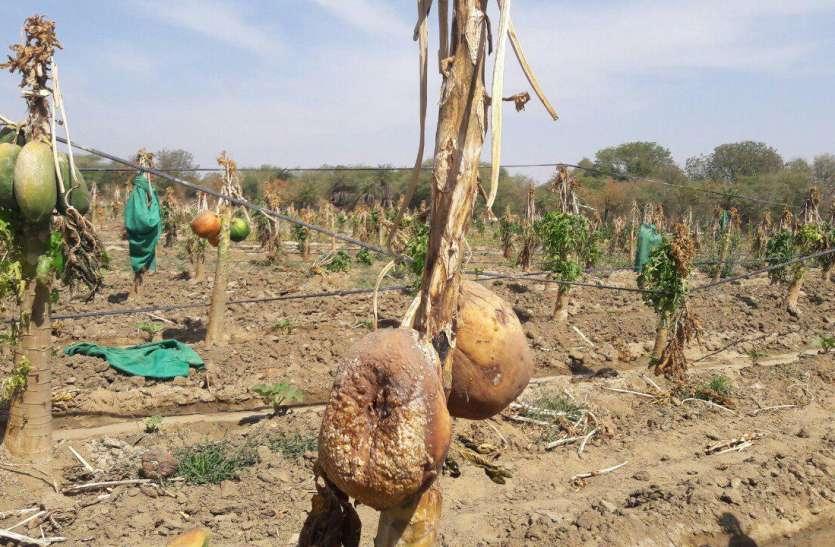 किसानों की मेहनत पर फिरा पानी