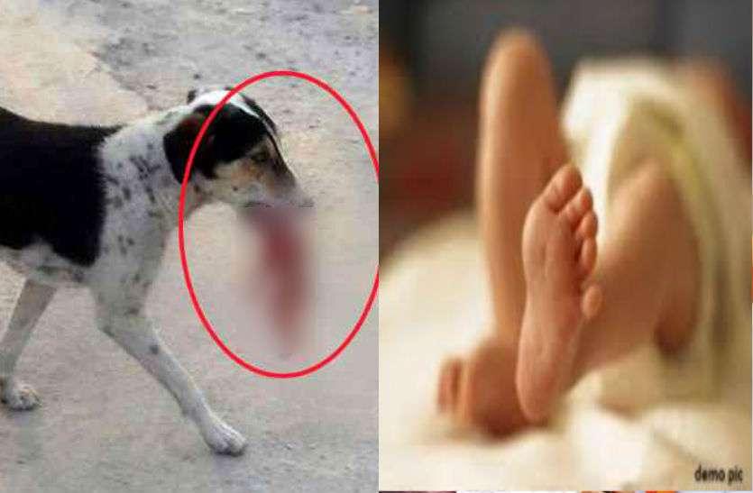 23 दिन के नवजात को उठा ले गया कुत्ता, किया ऐसा हाल कि देखकर बिलख पड़े परिजन