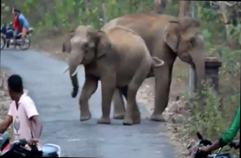 ओडिशा की सीमा पार कर छत्तीसगढ़ पहुंचा चार जंगली हाथियों का दल, वन विभाग के अधिकारी चौकन्ना