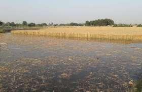नहर का तटबंध टूटा,पचास एकड़ से अधिक गेहूं की फसल जलमग्न