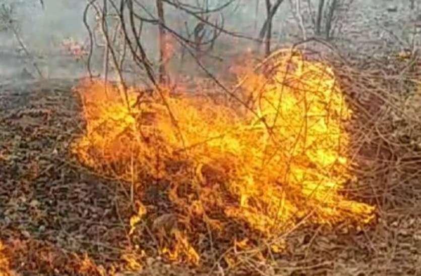 पन्ना टाइगर रिजर्व के जंगल में भड़की आग, भरसक प्रयास के बाद भी नहीं बुझी