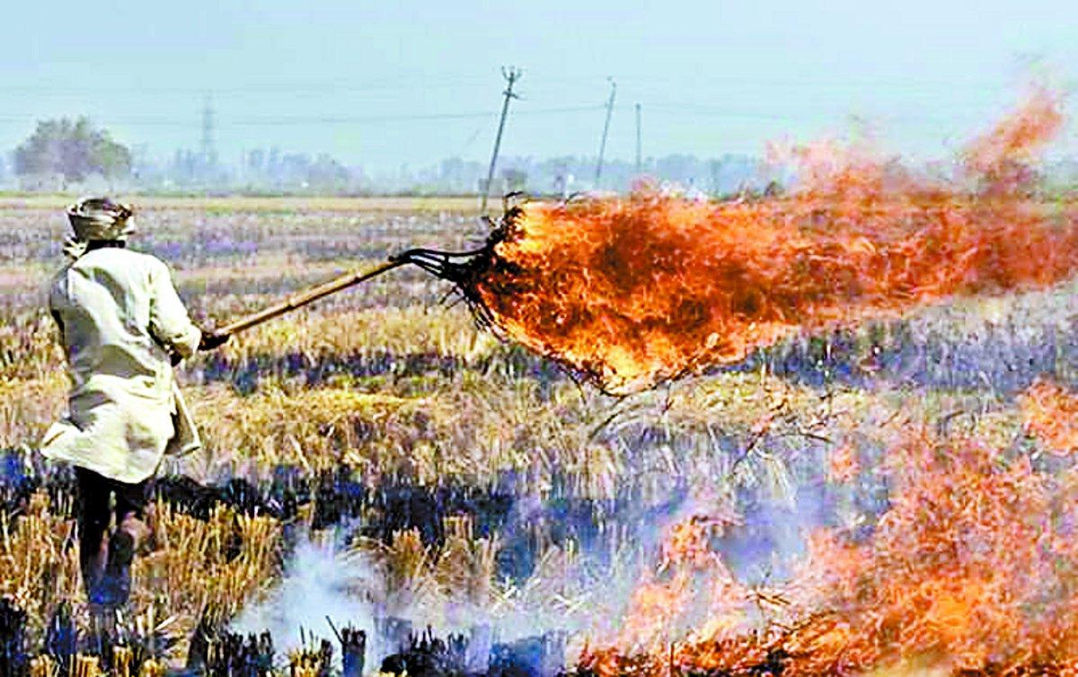 प्रतिबंध के बाद भी खेतों में जल रही नरवाई