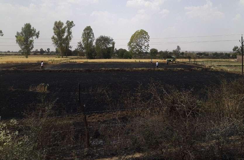 तीन बीघा का गेहूं जलकर खाक, पंजा चलाकर बचाई 500 बीघा की फसल