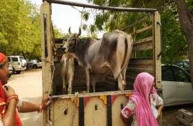 मालिकाना हक को लेकर सामने आया अनूठा मामला, फैसले के लिए मजिस्ट्रेट के सामने पेश हुई गाय