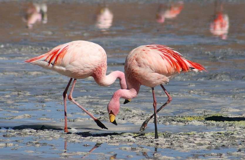 मुंबई का प्रदूषण इस प्रजाति के पक्षियों के लिए मुफीद
